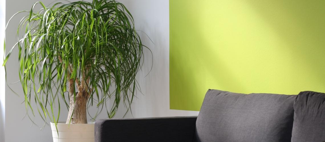 apartment-comfort-contemporary-260046